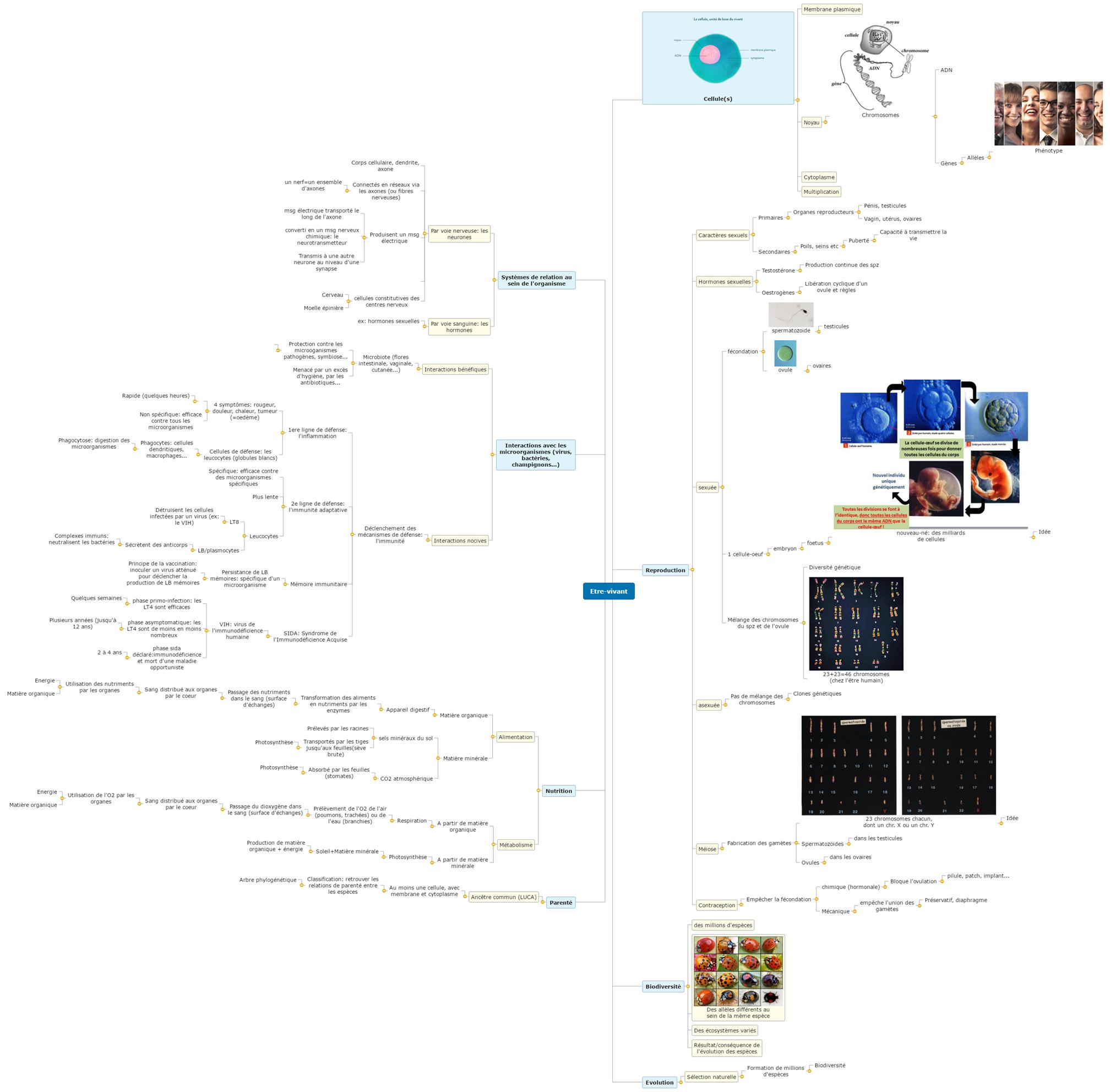 Etre-vivant seconde A Mind Map