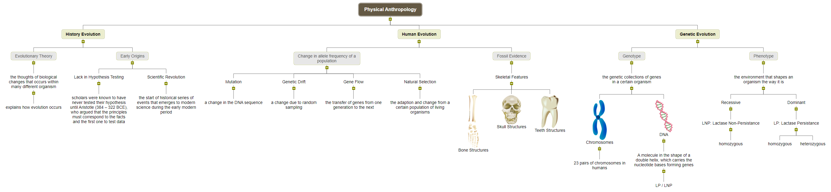 Physical Anthropology Mind Map