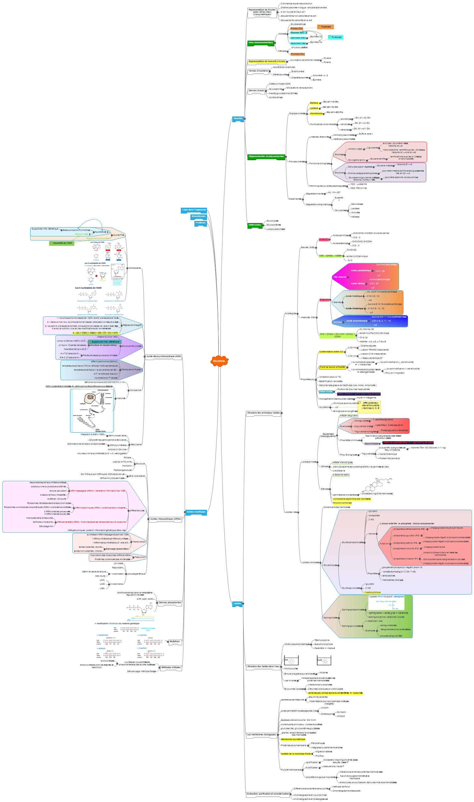 Biochimie Mind Maps