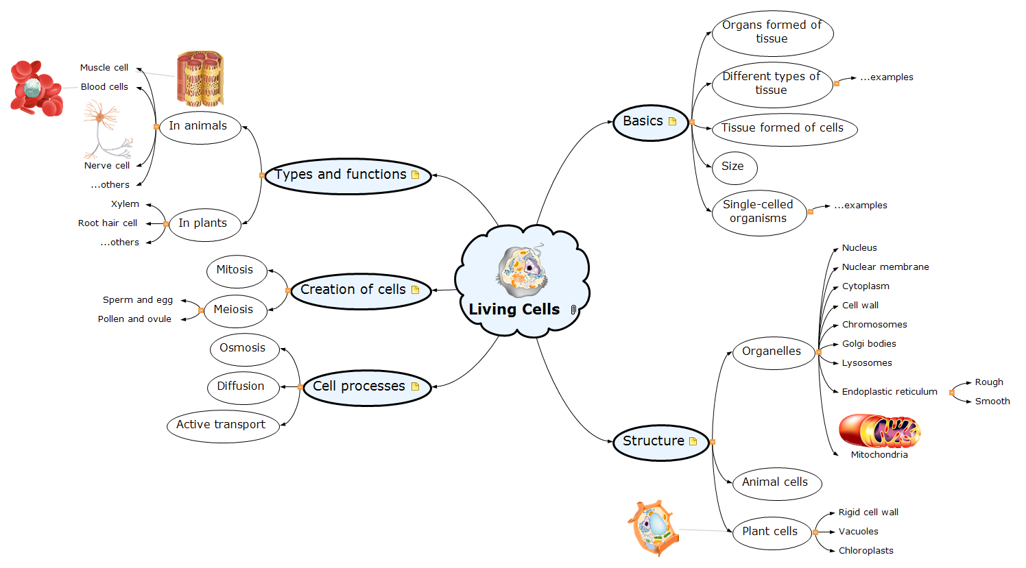 Living Cells Mind Map