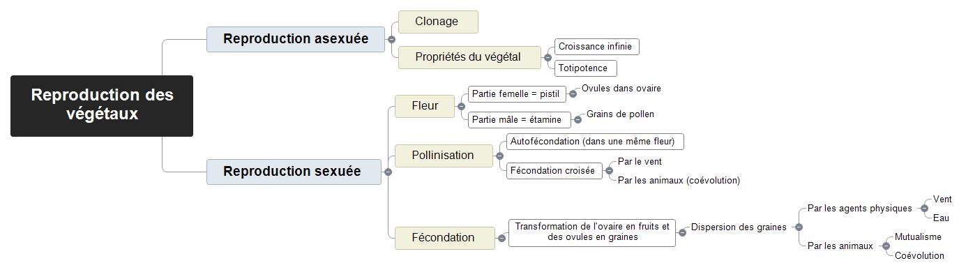 Reproduction des végétaux Mind Maps