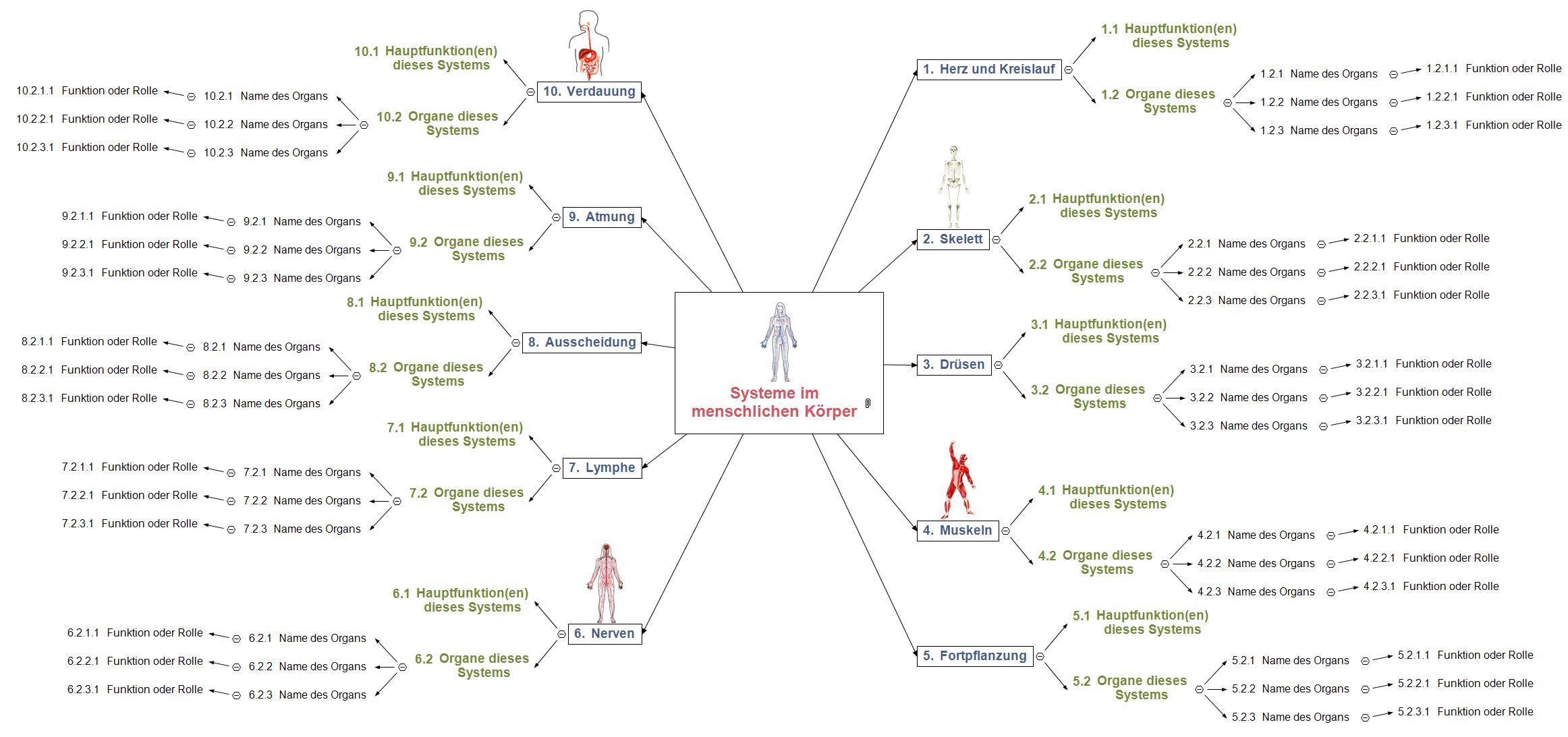 Systeme im menschlichen Körper Mind Map