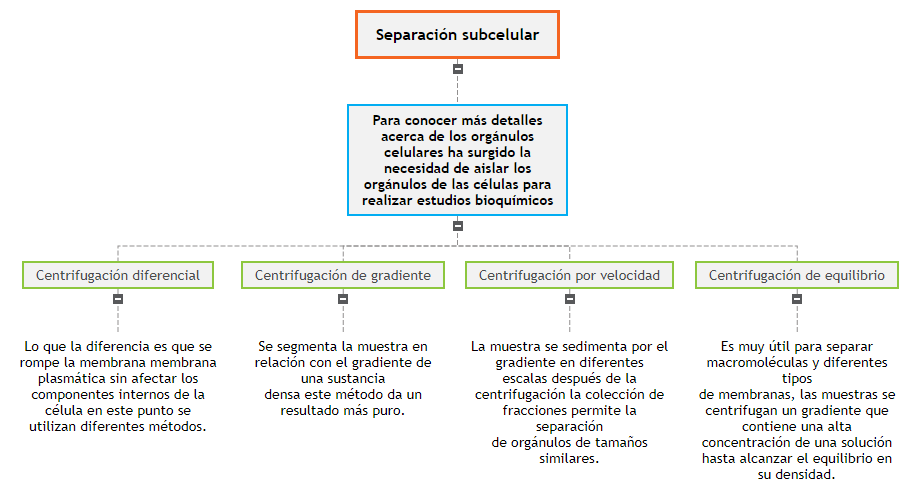 Separación subcelular Mind Map