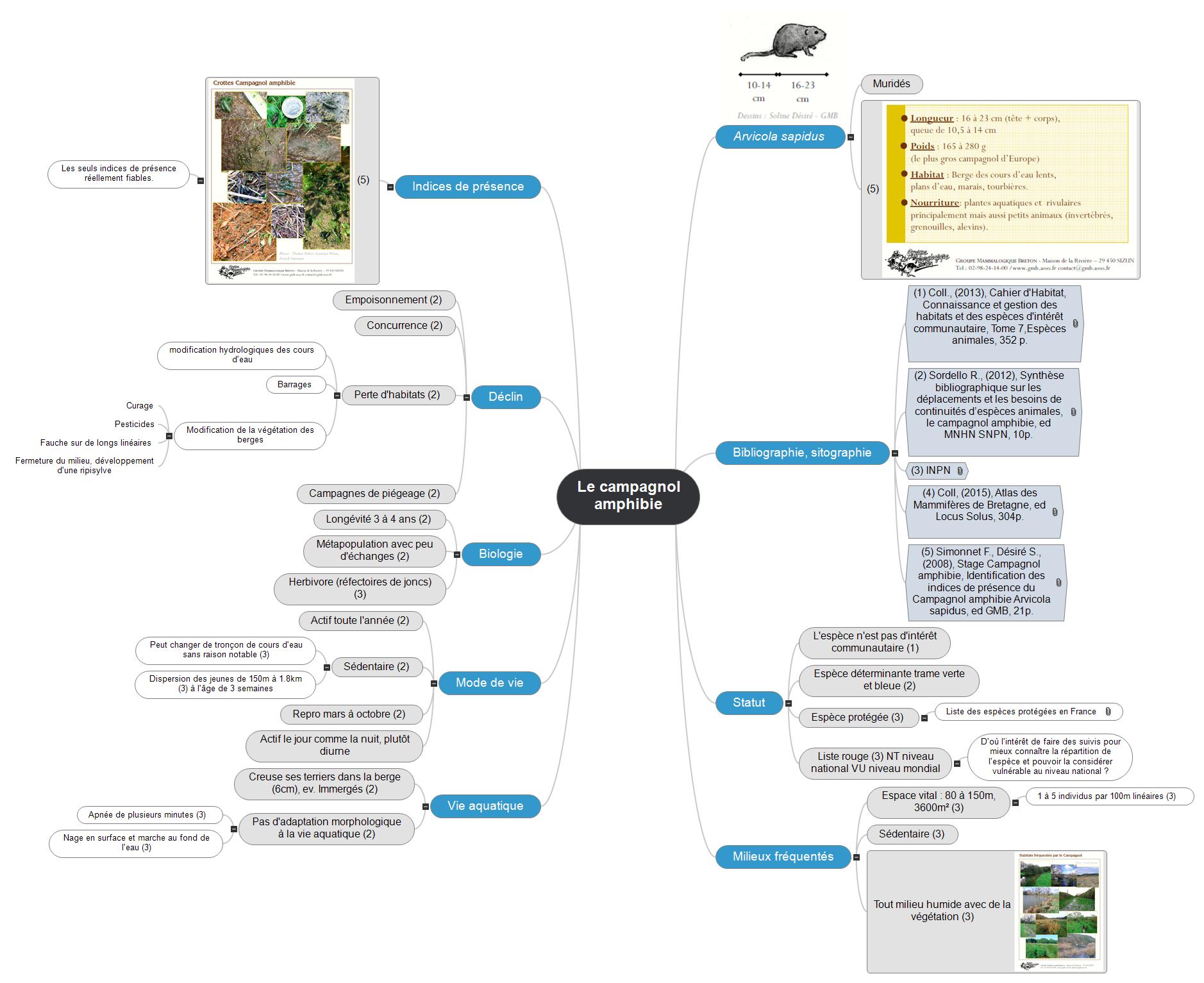 Le campagnol amphibie Mind Maps