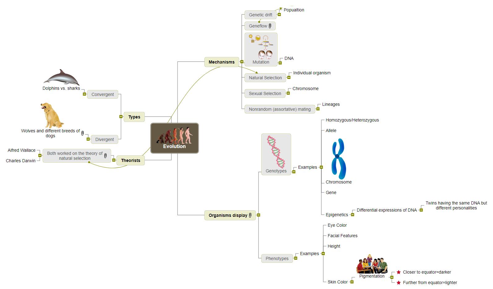 Evolution visual 1 Mind Map