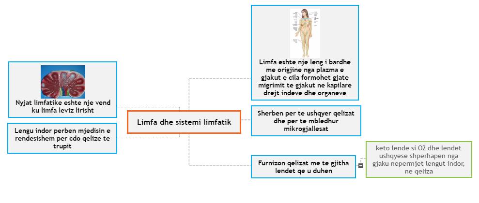 Limfa dhe sistemi limfatik1 Mind Map