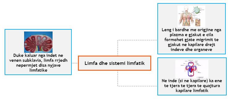 Limfa dhe sistemi limfatik Mind Map