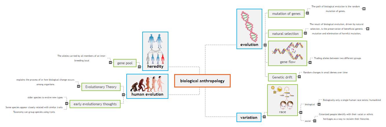 biological anthropology Mind Map