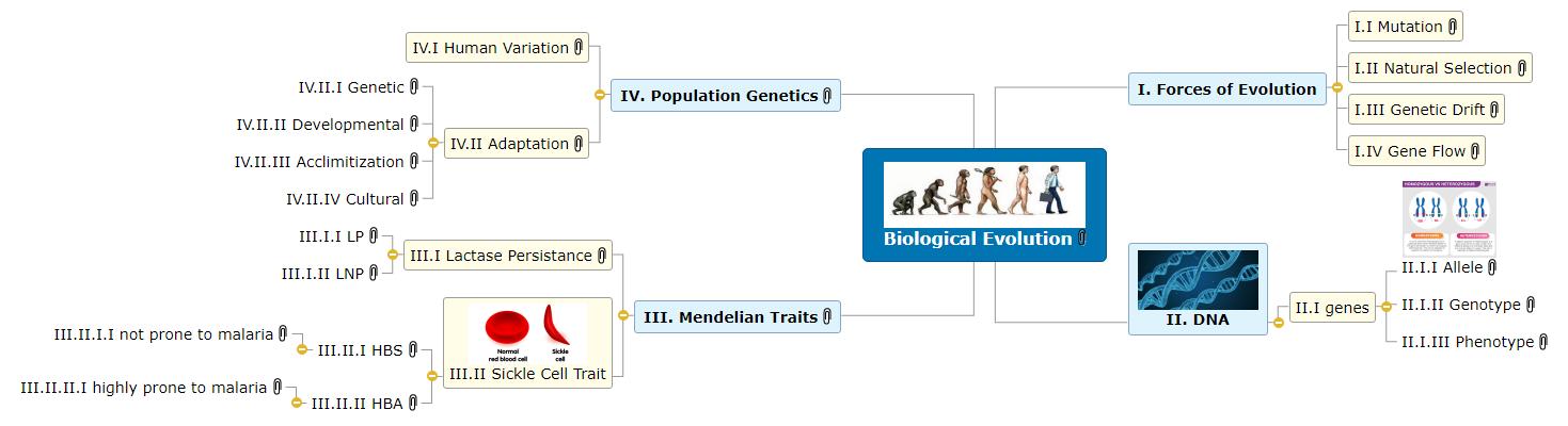 Biological Evolution Mind Map