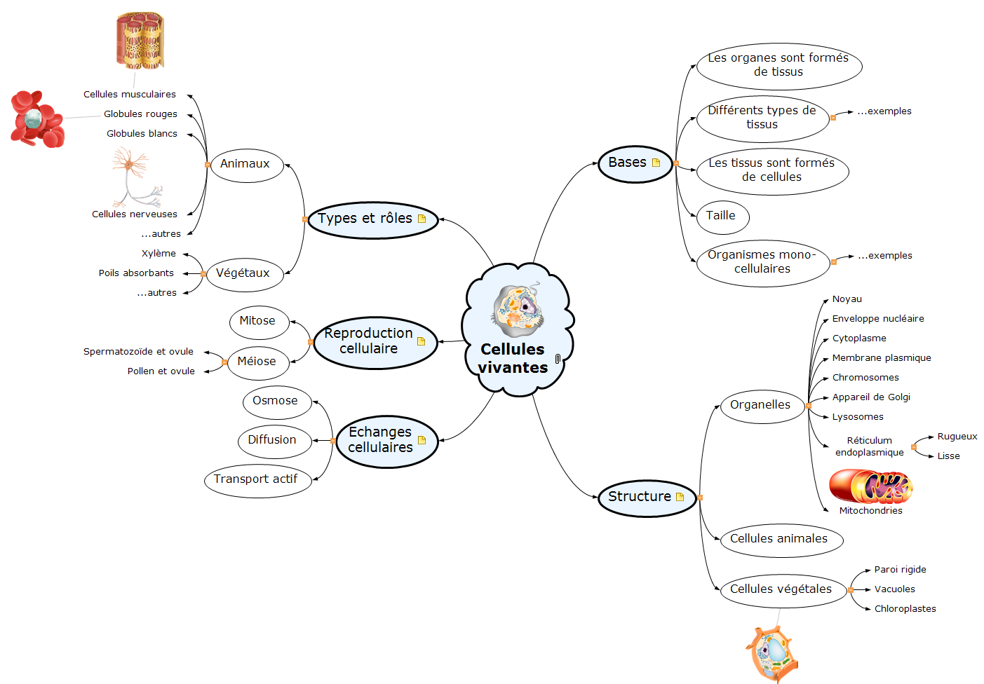 Les cellules vivantes Mind Map
