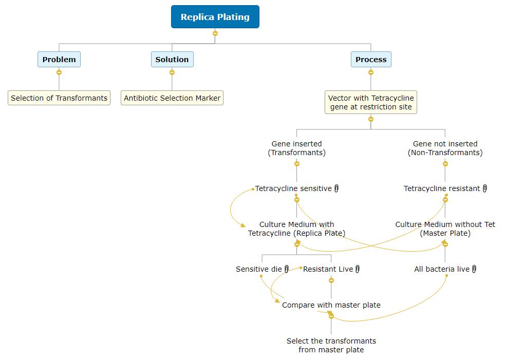 Replica Plating Mind Map