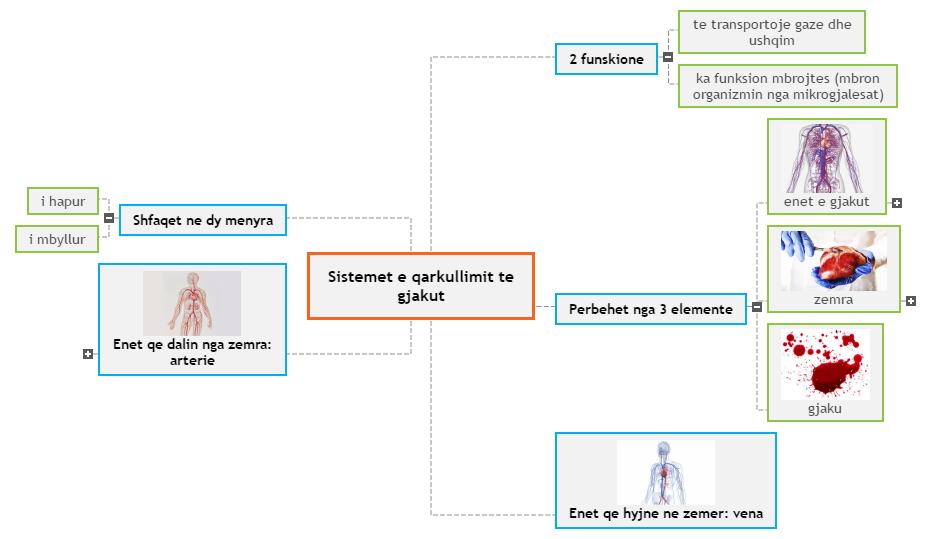 Sistemet e qarkullimit te gjakut Mind Map