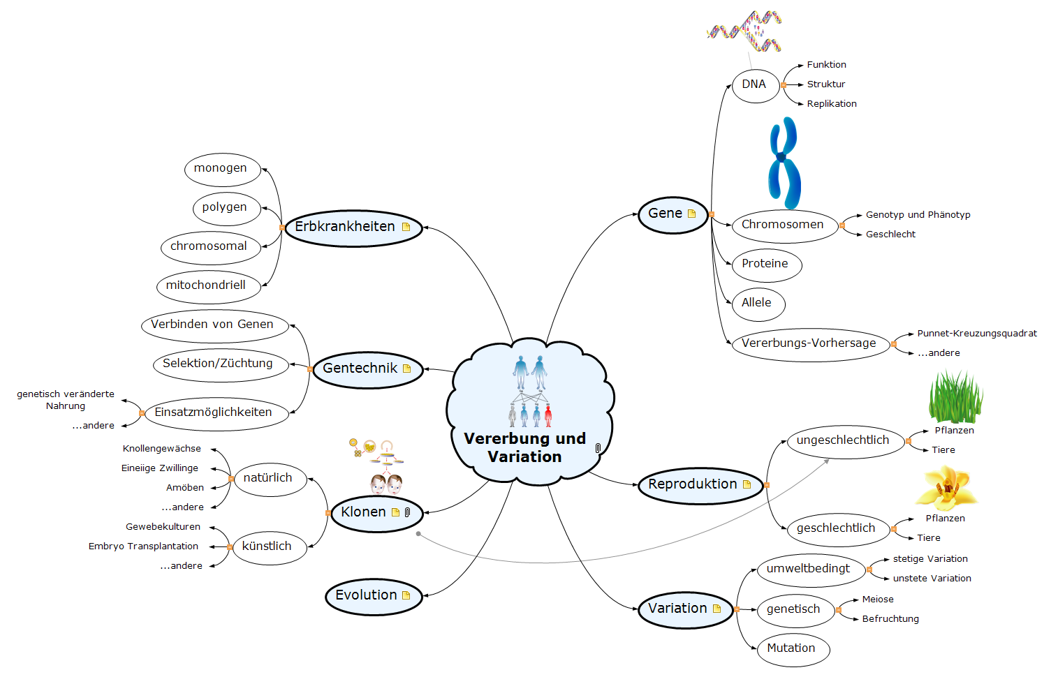 Vererbung und Variation Mind Map
