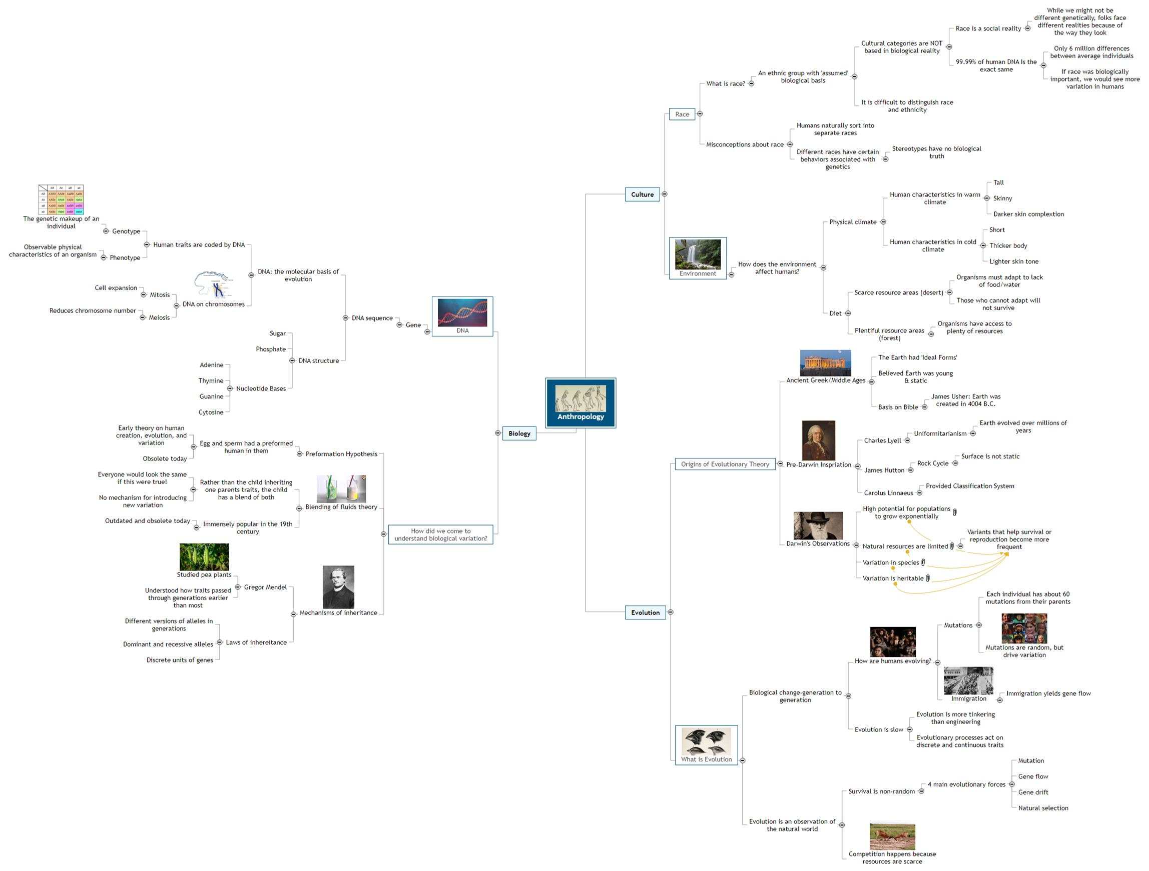 Anthropology Mind Map