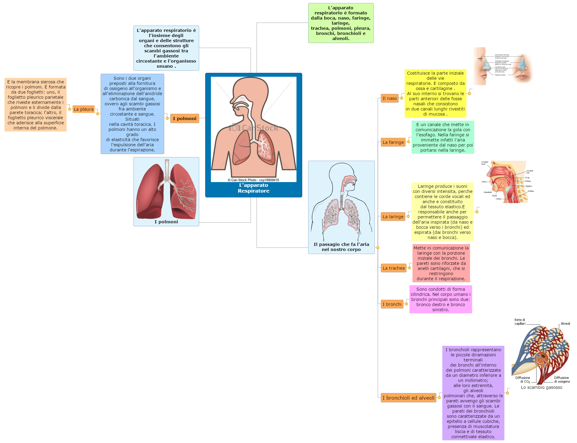 L'apparato Respiratore Mind Map