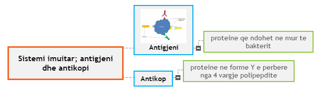 Sistemi imuitar; antigjeni dhe antikopi Mind Map