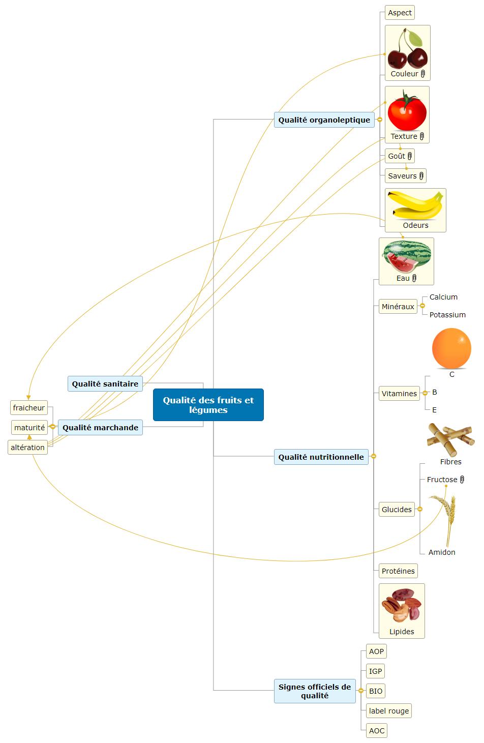 Qualité des fruits et légumes1 Mind Maps